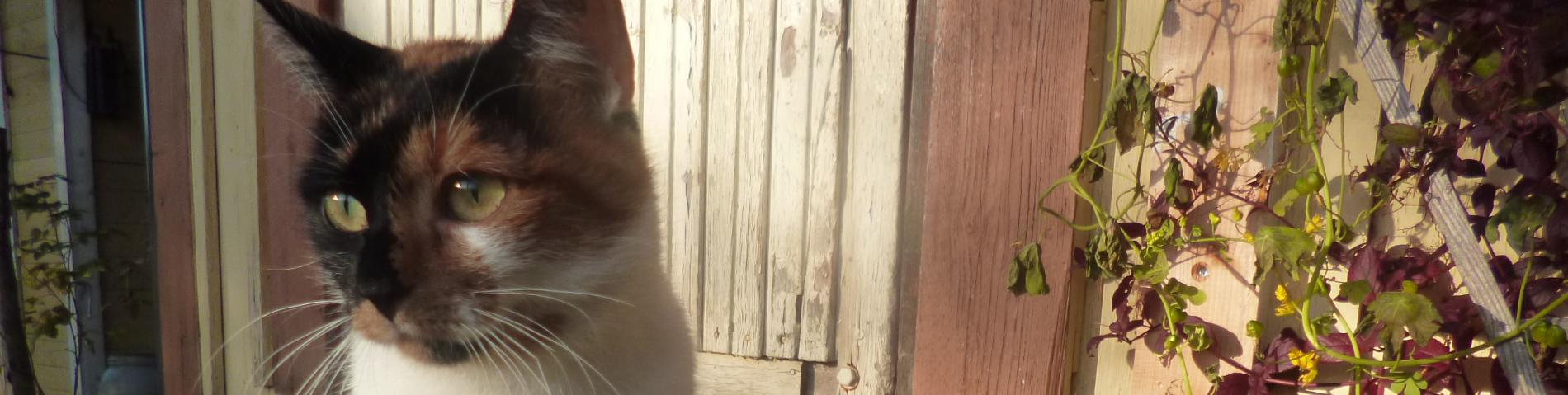 Sophie the cat Beyond Buckthorns