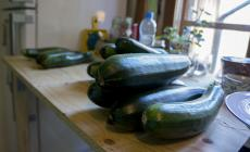 Zucchini waiting on the workbench to be chopped