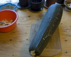 Mega Zucchini ready for seed collection